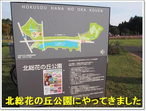 20151101_400.jpg