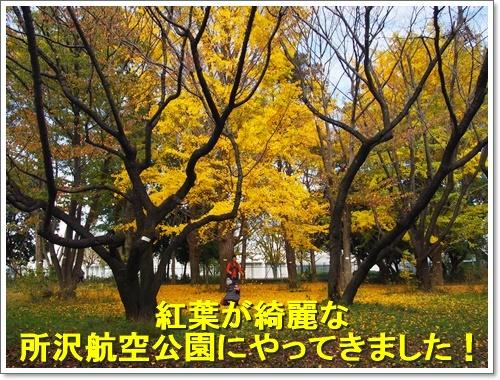 20151121_038.jpg
