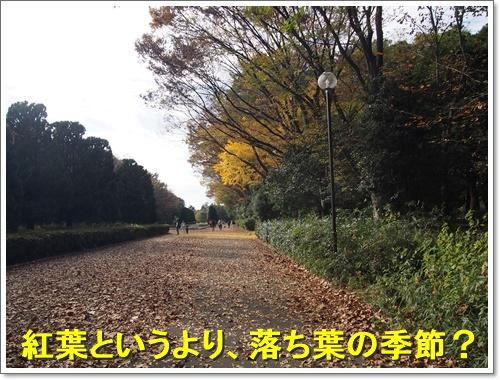 20151121_040.jpg