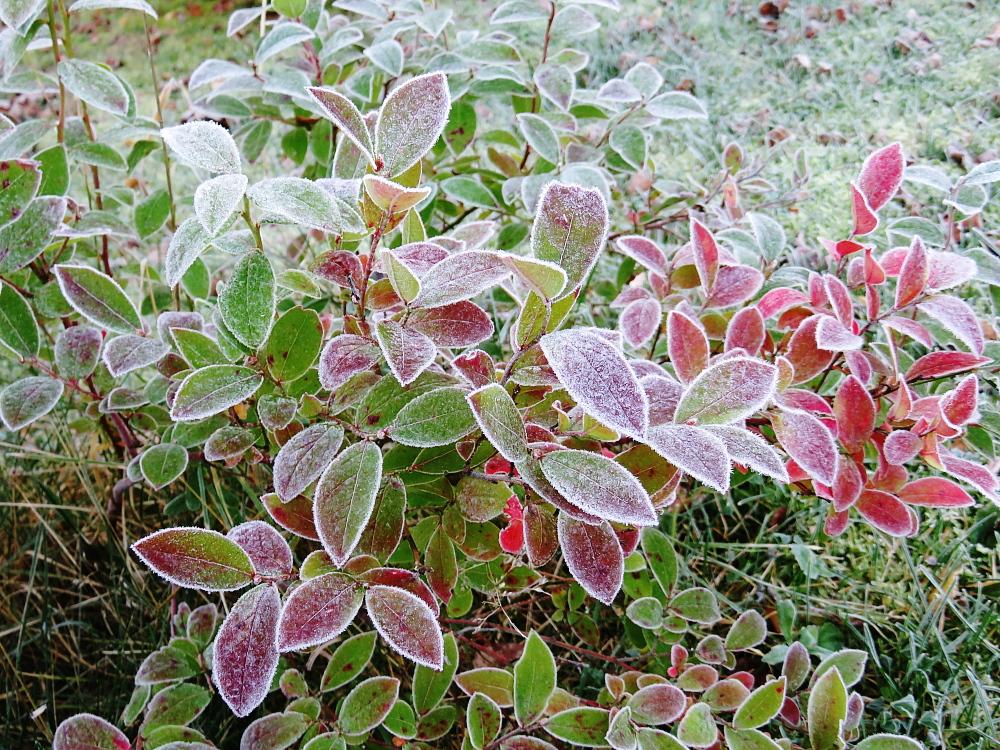 霜 Huurre Frost