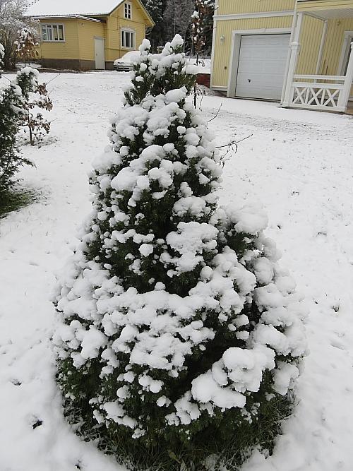 Lumi 初雪 フィンランド