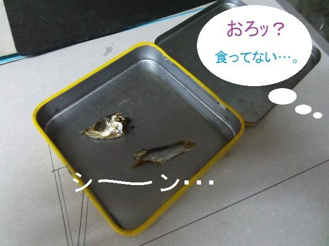 mezasi08.jpg