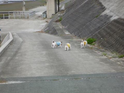 久しぶりの散歩(2)