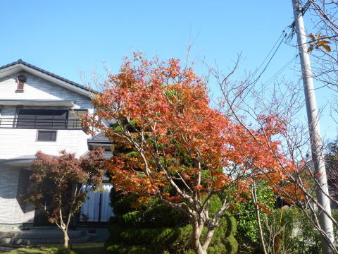 今年の紅葉(2)