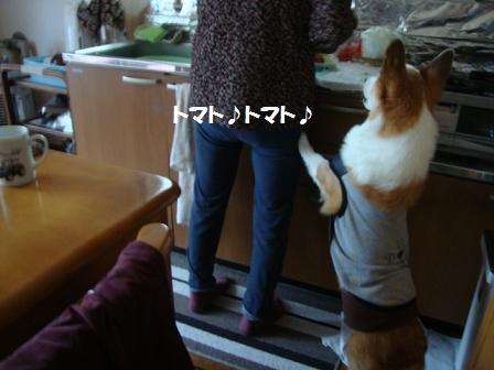 おねだり紋兄2