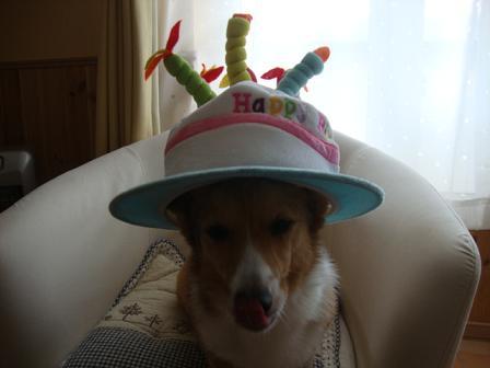 バースデー帽子で4