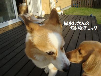 みらいちゃんと紋兄2