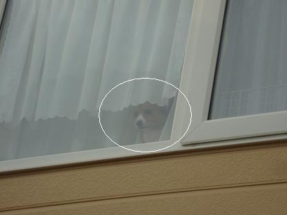 2階窓から杏