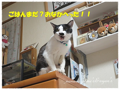 IMG_0036_201509132132421c0.jpg