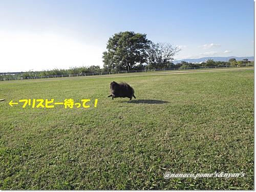 IMG_0043_20151105203443d08.jpg