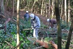 小径木を伐採