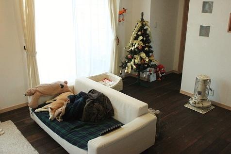 IMG_2920-s.jpg
