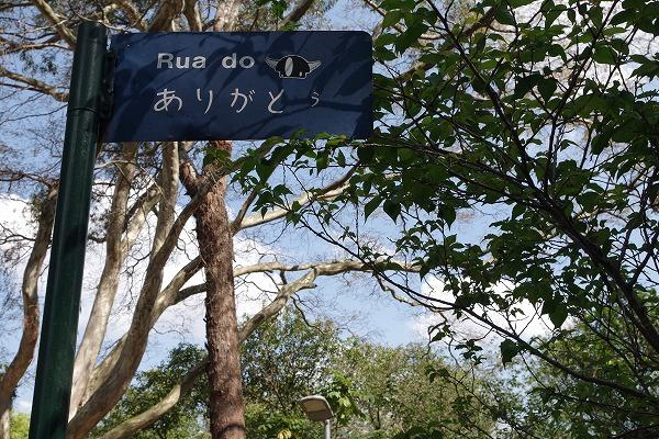 s-イビラプエラ公園とアフロ (2)