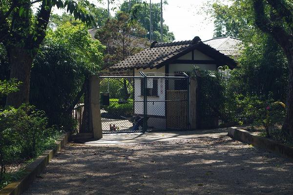 s-イビラプエラ公園とアフロ (6)