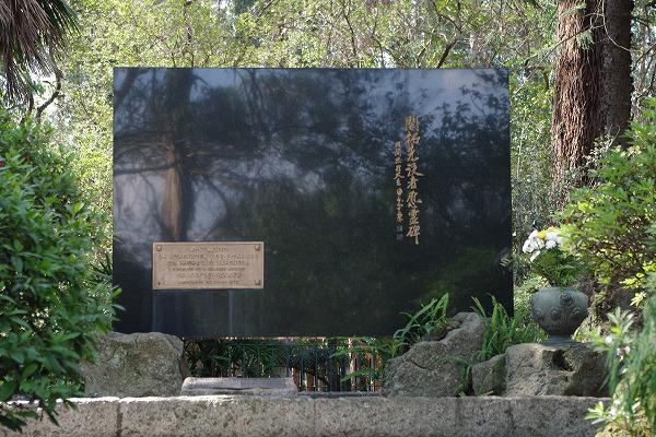 s-イビラプエラ公園とアフロ (3)