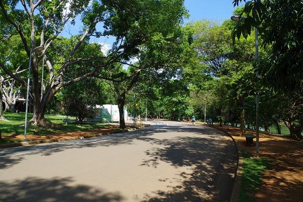 s-イビラプエラ公園とアフロ (8)