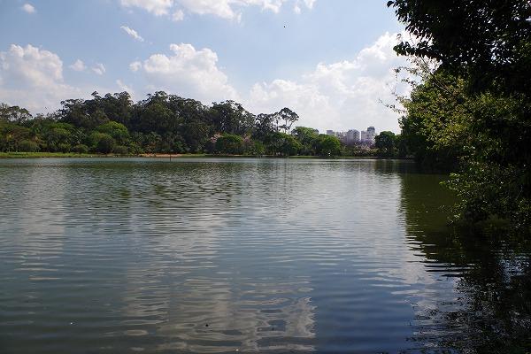 s-イビラプエラ公園とアフロ (7)