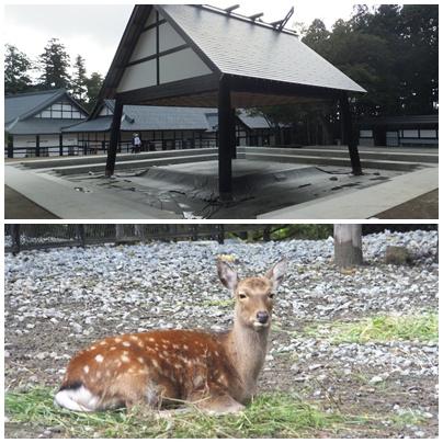 新潟 弥彦神社