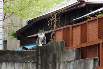 きたせんじゅの屋根の上ネコ