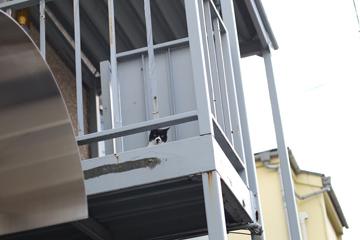 上をみるとネコが