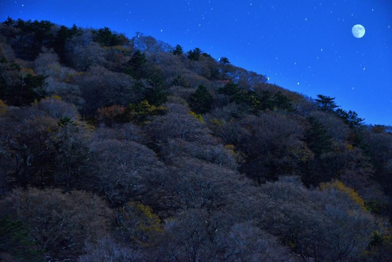 「月照のダケカンバ林」 (徳島県奥槍戸)