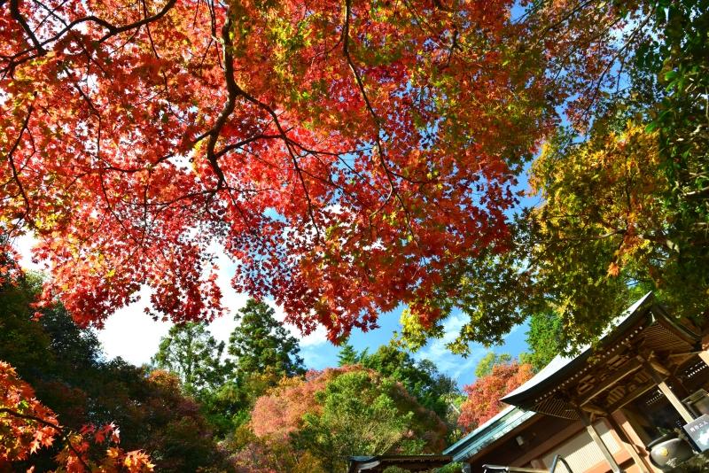 「根香寺紅葉」  (香川県高松市)