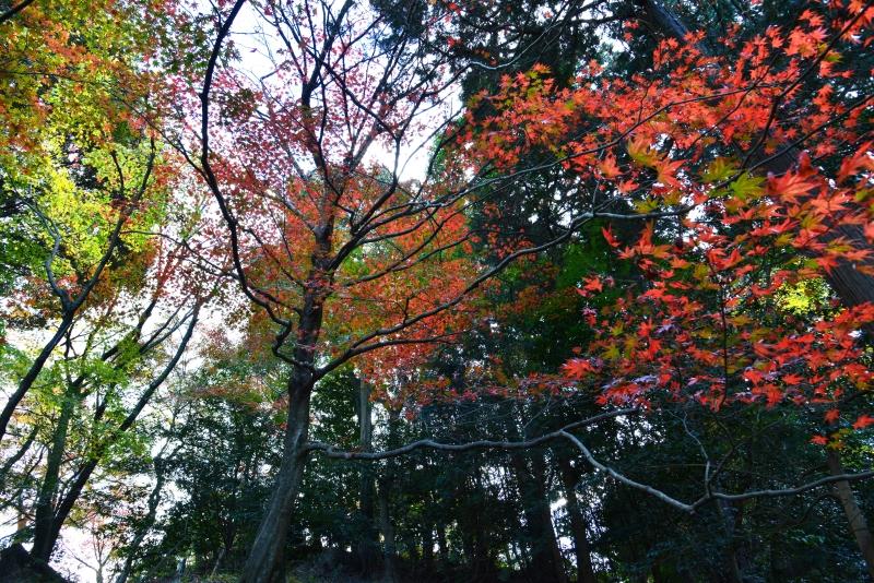 「金比羅宮裏参道紅葉2」  (香川県琴平町)