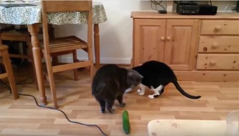 CatsVSCucumbers4