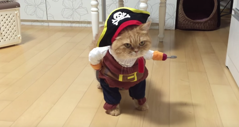 cat-dressed-as-a-pirate-just-won-halloween