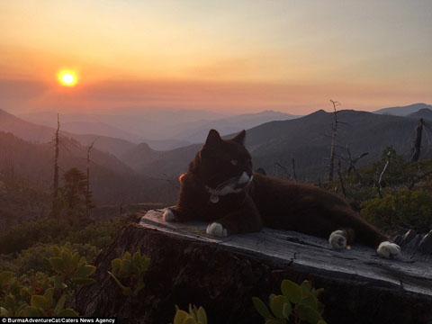 アルバムに追加 2D96EC4900000578-3281012-The_original_adventure_cat_settles_down_at_sunset_in_Oregon_afte-a-27_1445349720914