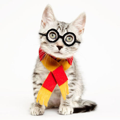 3053004-slide-s-7-these-heroes-put-adorable-costumes-on-shelter-cats-to-make-them-more-adoptable