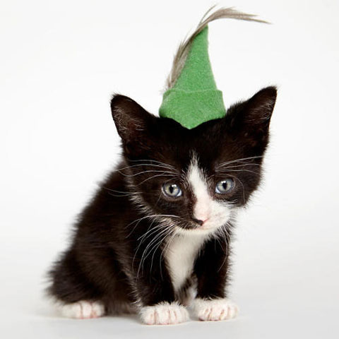 3053004-slide-s-6-these-heroes-put-adorable-costumes-on-shelter-cats-to-make-them-more-adoptable