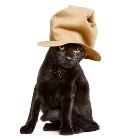 アルバムに追加 3053004-slide-s-5-these-heroes-put-adorable-costumes-on-shelter-cats-to-make-them-more-adoptable-1