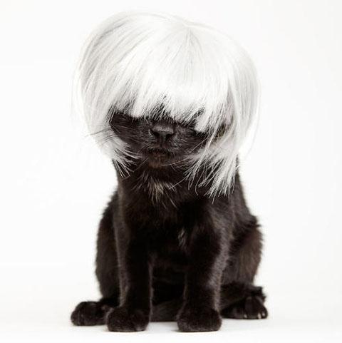 アルバムに追加 3053004-slide-s-3-these-heroes-put-adorable-costumes-on-shelter-cats-to-make-them-more-adoptable