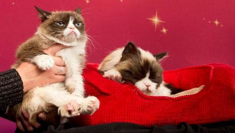 Grumpy_Cat_bei_Madame_Tussauds_verewigt-Grantige_Kopie-Story-486063_630x356px_6c8891534d01ad9c1ff081696710823b__unbenannt_png
