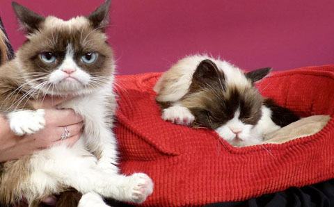 how-terrible-grumpy-cat-at-madame-tussauds