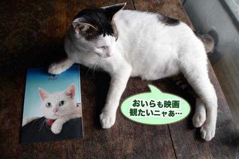 nekozamurai7_090615