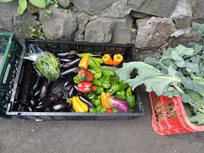 今日の野菜DSCN7160