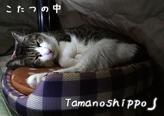 こたつの中の猫と湯たんぽ