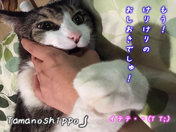 足ケリケリ!キックする猫(ちび)