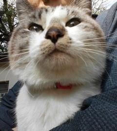 旧正門の猫1