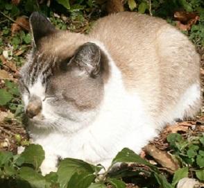 旧正門の猫2