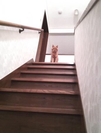 階段の上のアジャリ