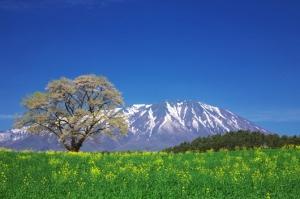 「日本の心を歌う集い」実行委員会