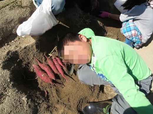2015.10.25 芋掘り 014