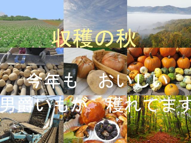 potato_20151021000232105.jpg