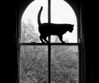 猫 忍び足 ボーダーライン