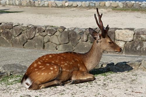 IMG_6683 鹿