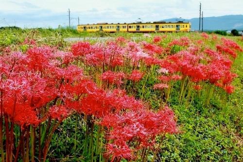 IMG_8890 三岐鉄道と彼岸花