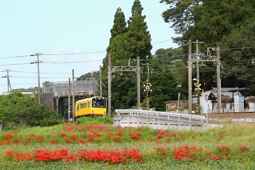 IMG_8952 三岐鉄道と彼岸花 -2